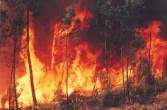 Resultado de imagem para efeito estufa e aquecimento global