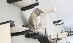 CHAT - Des plateformes, des trous ou encore un pont suspendu... Avec ces structures, votre chat deviendra le roi de l'équilibre.
