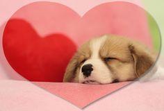 バレンタインだワン~/犬 イヌ dogs  (ネスレ日本)