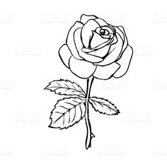 Rose sketch Black outline on white background Vector illustration Outline Drawings, Art Drawings, Rose Outline, Rose Sketch, Shoulder Tattoos For Women, Hearts And Roses, Free Vector Illustration, Art Tutorials, Drawing Sketches