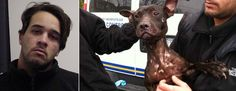 "DA: West Hempstead man charged with promoting dogfighting POS! I say we move dog fighting charges into the penal code rather than ""agriculture"" for tougher sentencing!"