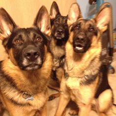 Family photo#Love to GSD