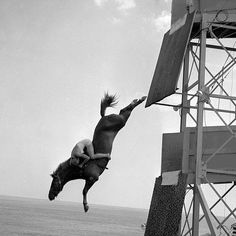 vintage horse diving
