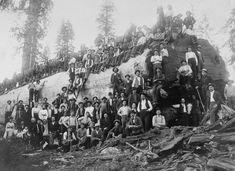 Those Old School Lumberjacks That Fell America's Giant Trees