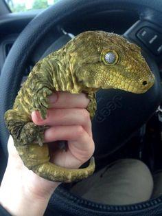 Bringing home my baby Dinosaur - Album on Imgur