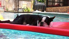 Niko relaxing in the pool!