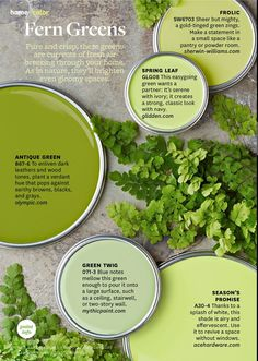 Paint Palette Fern Greens Swatcheswall Colorsgreen