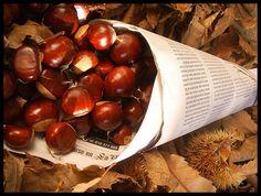 Fruits de Tardor - Bing Imágenes