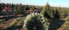 Dellinger's #Christmas #Trees To http://houston.kidsoutandabout.com/