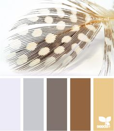 Feathered tones for room colour ideas