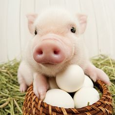 Artist Collection THE PIG Garden Calendar— April 2014