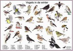 hier vind je een kaart van alle vogels in de winter