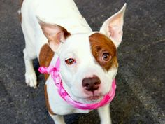 Manhattan NY.  Hilary.  Female.  2 yrs.  Dies in a.m.  See Urgent Part 2 on fb.***RESCUED***