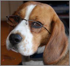 I'm smarter than the average dog!