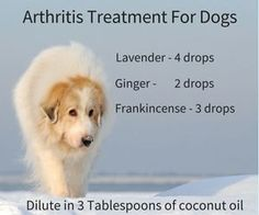Arthritis Treatment For Dogs