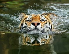 A matter of perspective by Klaus Wiese
