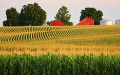 Corn Fields in Illinois thats my state. And I love the fields. Country Farm, Country Life, Country Roads, Country Living, Champs, Beautiful World, Beautiful Places, Southern Illinois, Bloomington Illinois