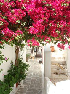 Typically Greek street, Naxos island, Cyclades, Greece. - Selected by www.oiamansion.com