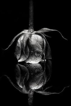Mooie zwart-wit foto Ars amandi ❤️ the art of love. Abstract Photography, Macro Photography, Macro Fotografie, Art Of Love, Black And White Aesthetic, Foto Art, Black And White Pictures, Pics Art, Still Life Photography