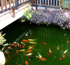 1000 images about for lease commercial building for Koi for sale florida