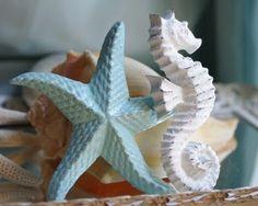 starfish and seahorse