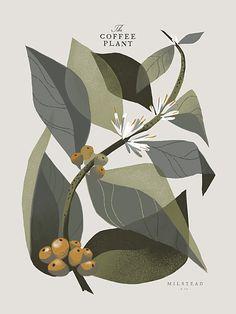 GRAPHIC DESIGNER Chris Turnham - beautiful illustration of the coffee plant