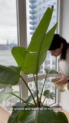 We're spending this cozy Self Care Sunday with Tatiana of @plantswithaview in her beautiful Brooklyn apartment ✨ She walks us through a typical day with her 150 houseplants and pup Stella, including some plant care and an afternoon spent in local shops and the farmer's market. Brooklyn Apartment, Go Around, Self Care Routine, Plant Care, Houseplants, Indoor Plants, Walks, Farmer, Pup