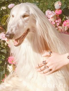 Chain rings featuring dogs, hearts and the number 25, Alessandro Michele's lucky number, appear on a lineup of silver jewelry pieces inspired by Unskilled Worker's artworks, part of a collection for the Year of the Dog.  Photographer: Petra Collins Creative Director: Alessandro Michele Art director: Christopher Simmonds