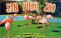 HONEYMOON ACTIVITY: San Diego Zoo Passes for 2, $88.  PANDAS!!!!!