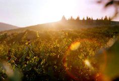 Shilo Winery