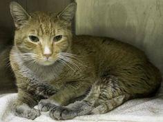 NYC Urgent Cats - 03/26/2014 – Wednesday NYC ACC Kill List