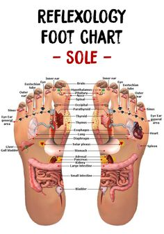 In this article you will find out a collection of reflexology foot maps and charts that will help you to learn better how to practice reflexology!