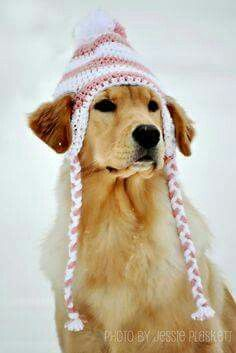 Image result for golden retriever stuck in  snow hats