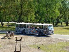 Safaribus