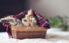 【萌宠】果然小奶猫神马的才是无敌哒! - https://mag.moe/22268 #萌宠 时间隔的有点久,让我们再来重新回顾一下这只叫黛西的小猫咪的萌照吧~                   澳籍日本摄影爱好者Ben Torode用独特的视角为自己的小猫咪黛西(Daisy)拍摄了一组萌照,在他的镜头下,黛西或是安静的呆着,或在调皮玩耍,有时也会探着脑袋露出好奇的表情,每一个动作都可爱至极。
