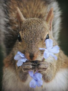 Grey squirrel Photo by mayte moya -- National Geographic Your Shot