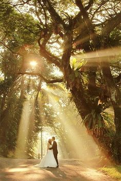 Sunlight peeking through the trees makes for an unforgettable wedding photo