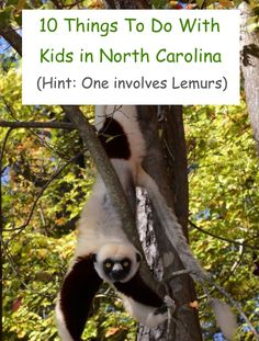 10 activities from one side of north carolina to the other.