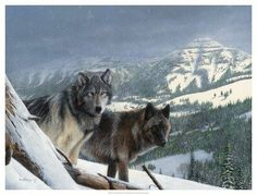 off of the fb page Howling for wolves with Native Drums.. please dont remove name or watermark when repinning. THANKS..