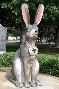 The Jackrabbit True plains Rabbit. Very long legs make him a swift runner, clocked at speeds to 45 miles and hour. Jack Rabbit, Rabbit Ears, Fun Facts About Texas, Texas Quotes, Different Flags, Lubbock Texas, Texas Flags, Tall Tales, Texas History