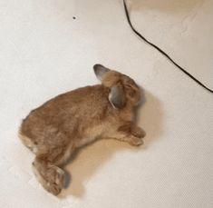 Der Hase rennt im Schlaf. Funny Bunnies, Cute Funny Animals, Cute Bunny, Cute Baby Animals, Funny Cute, Animals And Pets, Animal Pictures, Funny Pictures, Rabbit Run