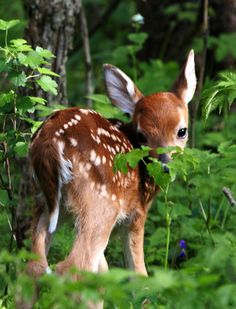 We get to see little fawns every year at our house...we are blessed, indeed