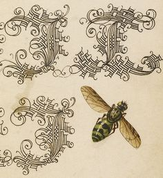 Potter Wasp, Hover Fly, and Caterpillars (detail), Joris Hoefnagel, Georg Bocskay, 1591-96, script 1561-62