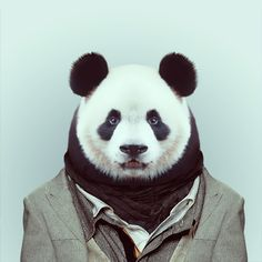 cool dude - yago-partal-zoo-portraits