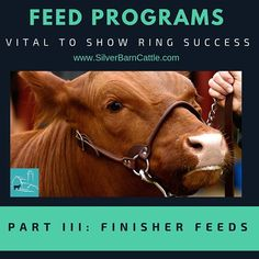 Will your calves make weight?  Finisher feeds is the topic for this blog post as we wrap up our 3-part series about feed programs for your show cattle.