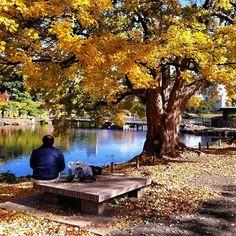 浜離宮恩賜庭園 (Hamarikyu Garden) - 浜離宮庭園1-1 autumn, fall, season, seasons, leaves, red, the real japan, real japan, japan, japanese, guide, tips, resource, tips, tricks, information, guide, community, adventure, explore, trip, tour, vacation, holiday, planning, travel, tourist, tourism, backpack, hiking http://www.therealjapan.com/subscribe/