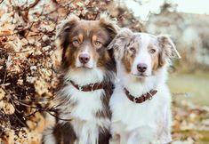 Hundehalsbänder bei MIKKIS für Ihren Liebling!  Handgemachte elegante & sportliche Halsbänder exklusiv bei MIKKIS.  #dog #instadog #hundeliebe #dogstagram #doglover #dogphotography #puppy #hundefotografie #dogs #hundträning Cute Wild Animals, Products