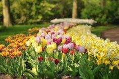 Resultado de imagem para imagens de belos jardins floridos