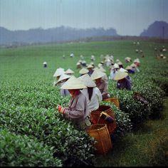 Оформление долгосрочной визы во Вьетнам со скидкой 25%   #tuanlinhtravel #визовыйцентр #виза #вьетнам #акция