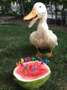 Happy Birthday Duck!